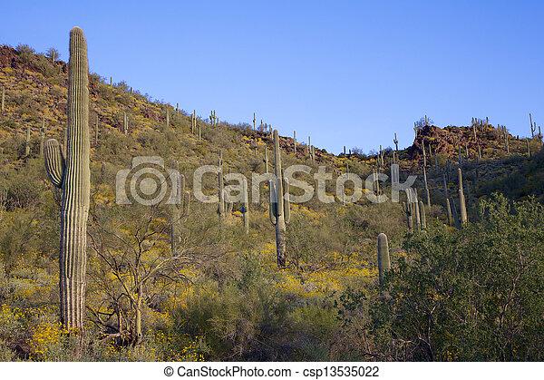 Arizona Desert in Bloom - csp13535022