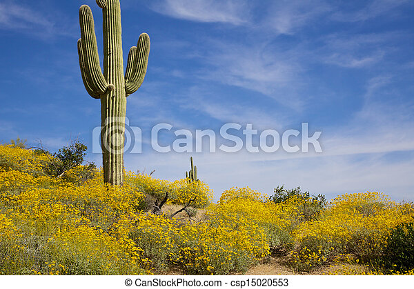 Arizona Desert in Spring - csp15020553