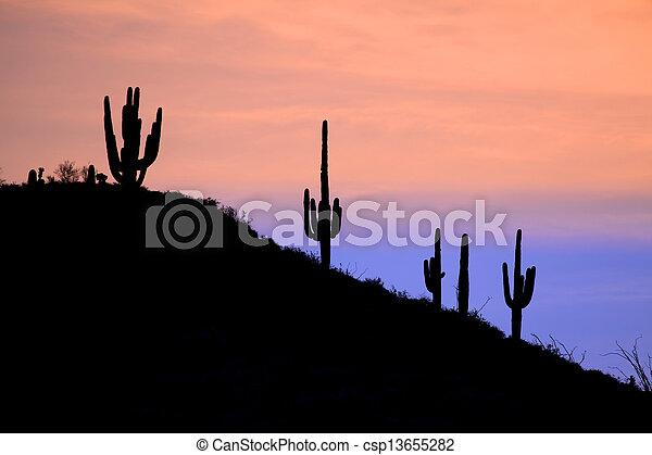Arizona Desert Sunset - csp13655282