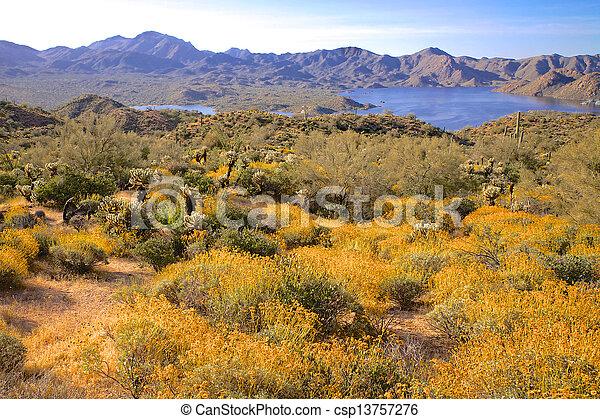 Arizona Desert Wildflowers - csp13757276