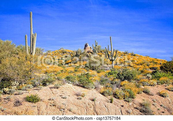 Arizona Desert Wildflowers - csp13757184
