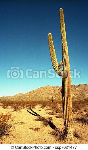 Arizona Saguaro - csp7621477