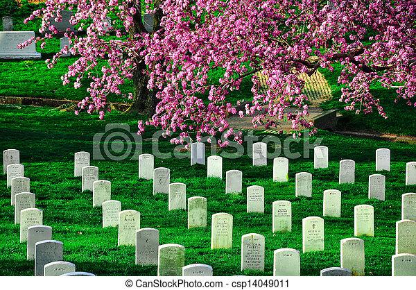 arlington rodak cmentarz - csp14049011