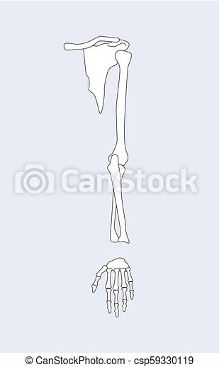 Arm Bones and Parts with Wrist Vector Illustration