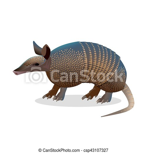 Armadillo isolated. Realistic placental mammal with leathery armour shell. - csp43107327