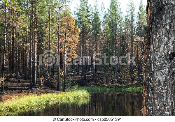 arn in forest after devastating fire - csp85051391