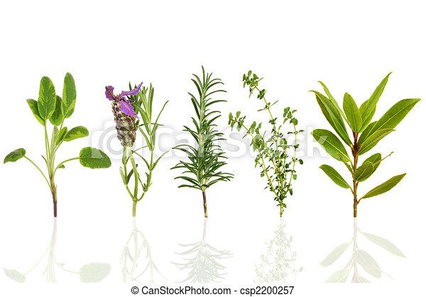 aromate, feuille, sélection - csp2200257