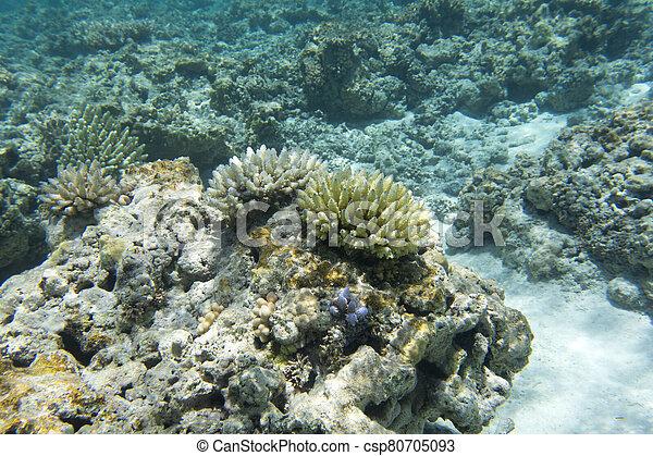 arrecife, coral, hermoso - csp80705093