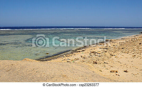 Coral arrecife - csp23263377
