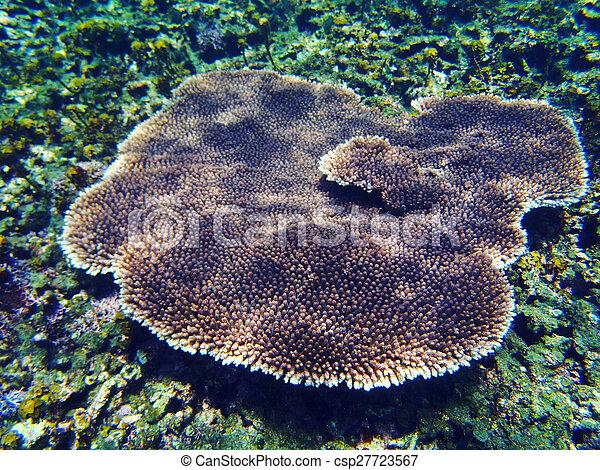 Coral tropical - csp27723567