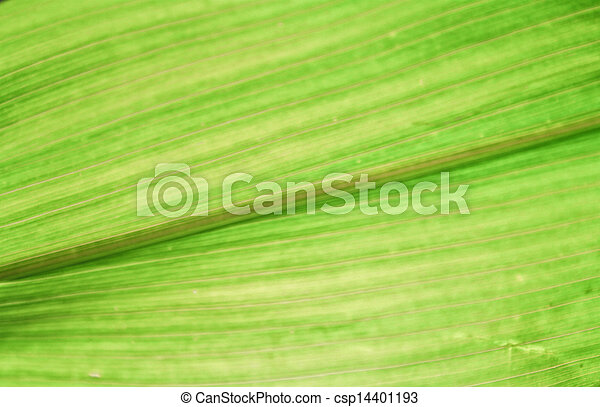 arrière-plan vert - csp14401193
