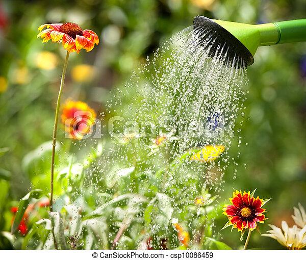 arroser fleurs - csp10086459