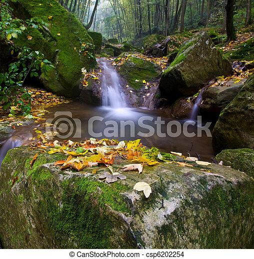Bosque de arroyo - csp6202254