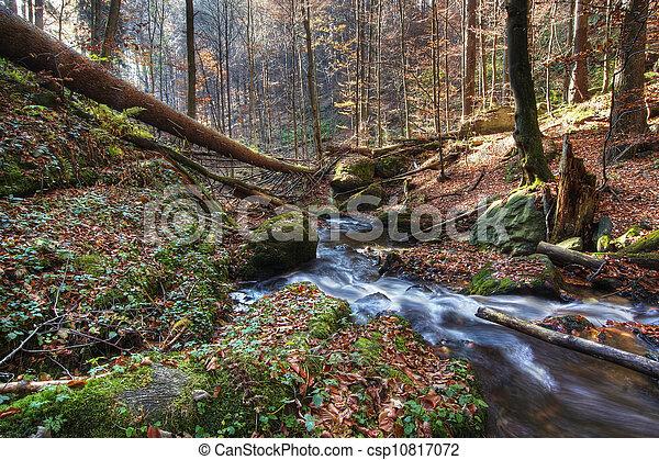 Brook en el bosque - csp10817072