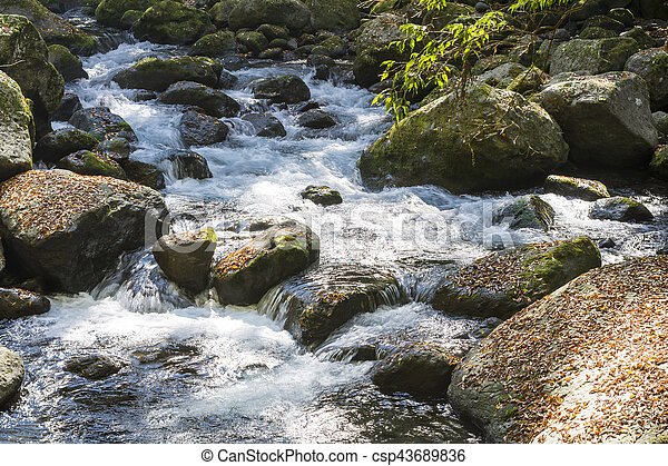 Brook fluyendo - csp43689836