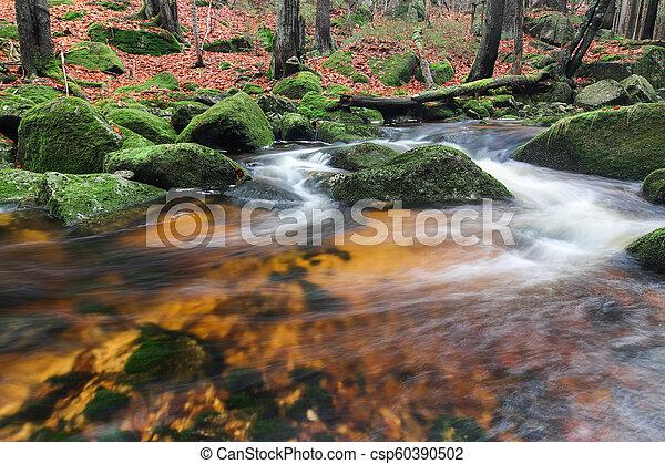 Rápidos en Jedlova Brook, Jizera Mountains, Chech Republic - csp60390502