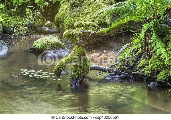 Brook y raíces - csp43256561