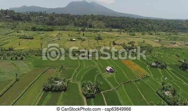 Arroz Agrícola Tierra Terrazas Indonesia