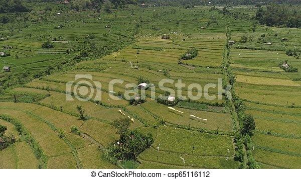 Terrazas De Arroz Y Tierra Agrícola En Indonesia Campos De