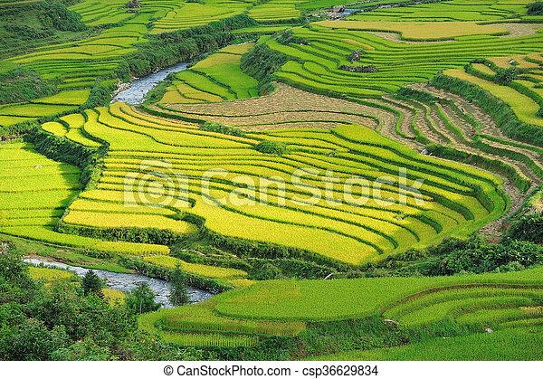 Arroz Terrazas En Savia Vietnam
