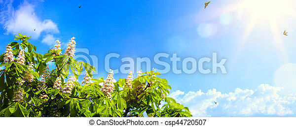 art abstract spring background background with spring flowers on blue sky background - csp44720507