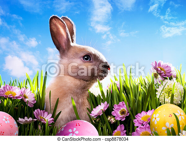 art baby Easter bunny on spring green grass - csp8878034