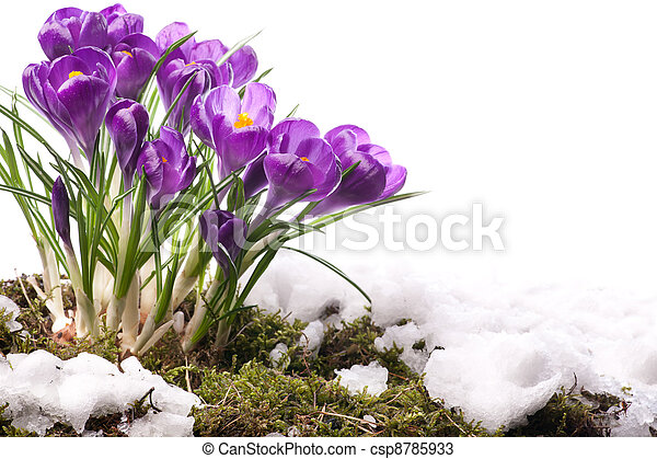art Beautiful Spring Flowers - csp8785933