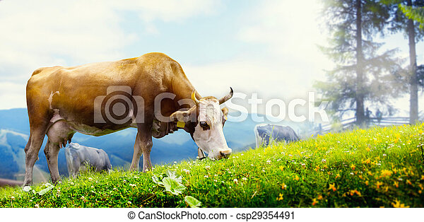 art cow grazing in a mountain meadow - csp29354491