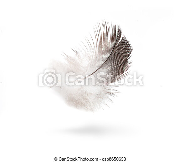art dove white feathers isolated on white background  - csp8650633