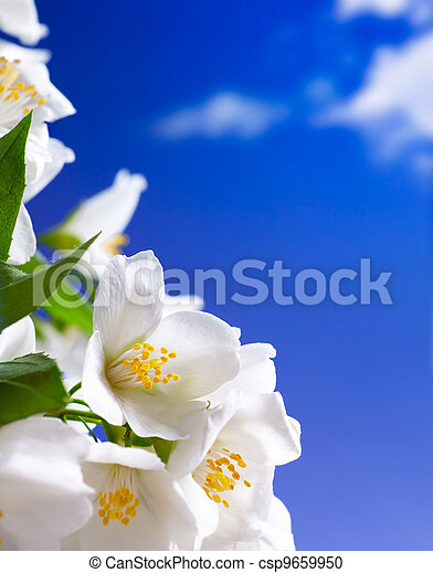 Art jasmine flowers background - csp9659950