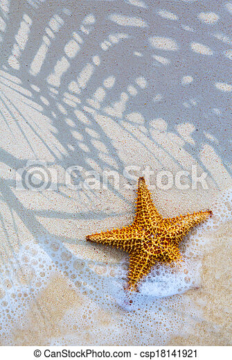 Art Sea star on the beach background - csp18141921