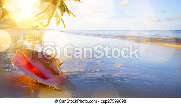art Shell on the tropical beach background - csp27599098