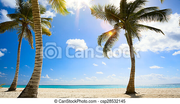 art Untouched tropical beach in caribbean sea - csp28532145