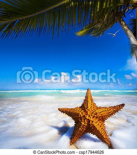 arte, spiaggia, stella, mare - csp17944626