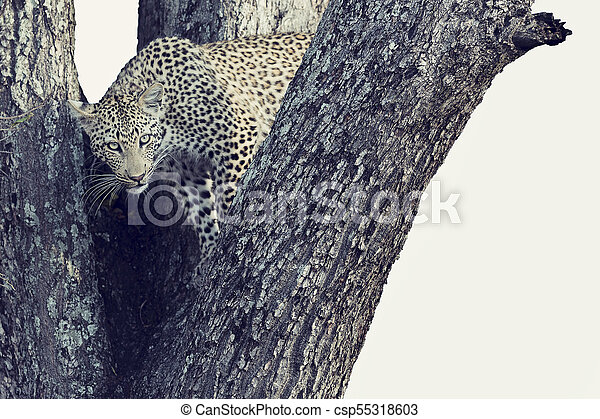 Artistic conversion of a leopard in big tree with thick branches - csp55318603