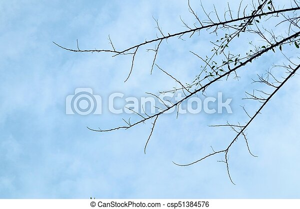 asciutto, albero - csp51384576