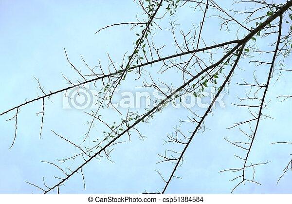 asciutto, albero - csp51384584