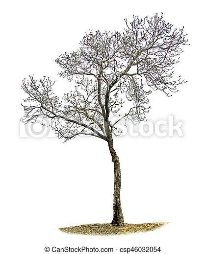 asciutto, bianco, albero, fondo - csp46032054