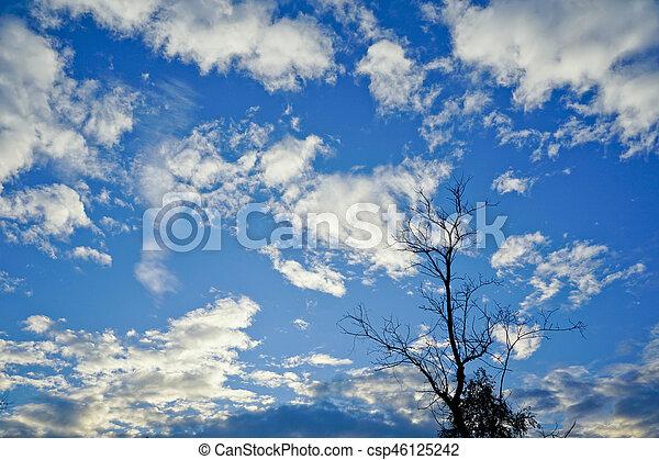 asciutto, blu, rami, cielo, albero, fondo. - csp46125242