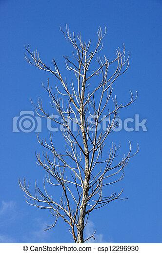 asciutto, cielo, albero, fondo, morto - csp12296930