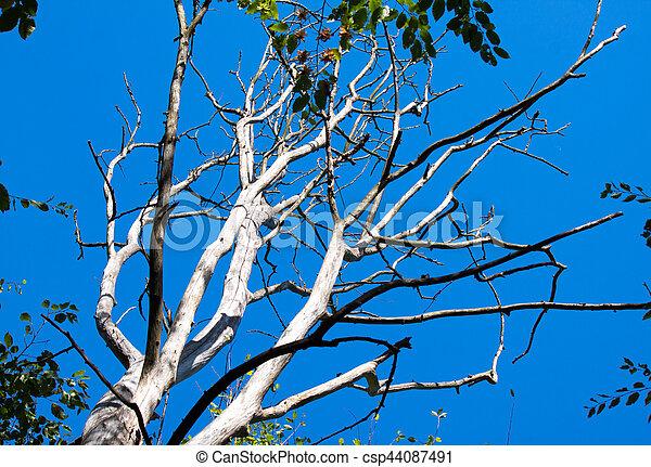 asciutto, cielo blu, fondo, albero - csp44087491