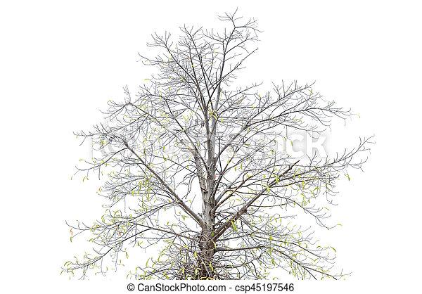 asciutto, fondo., bianco, albero - csp45197546