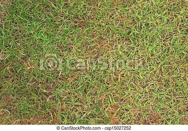 asciutto, football, field., erba - csp15027252