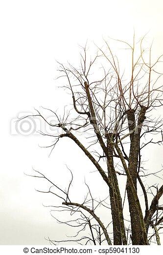 asciutto, grigio, albero, fondo, cielo - csp59041130
