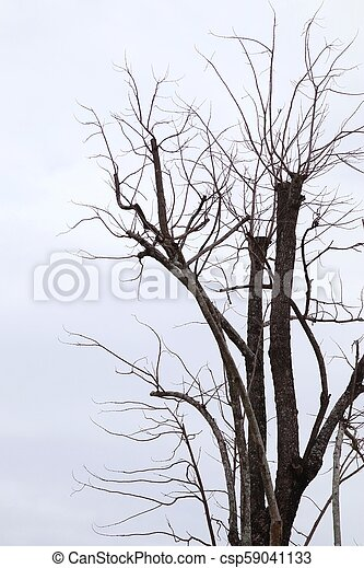 asciutto, grigio, albero, fondo, cielo - csp59041133