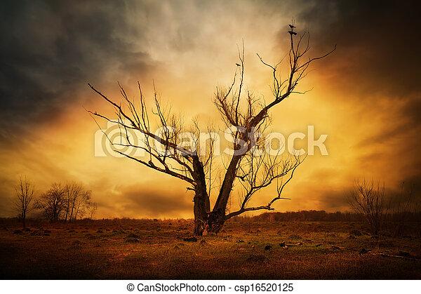 asciutto, rami albero, corvi - csp16520125