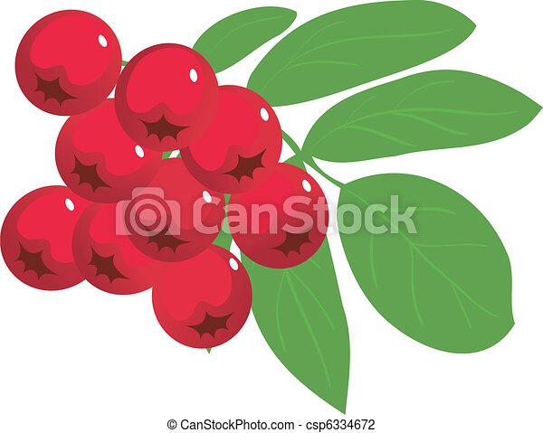 Ash-berry - csp6334672