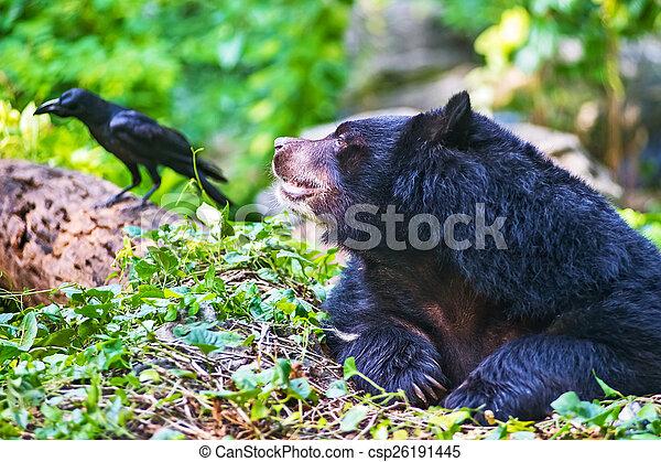 Asian black bear - csp26191445