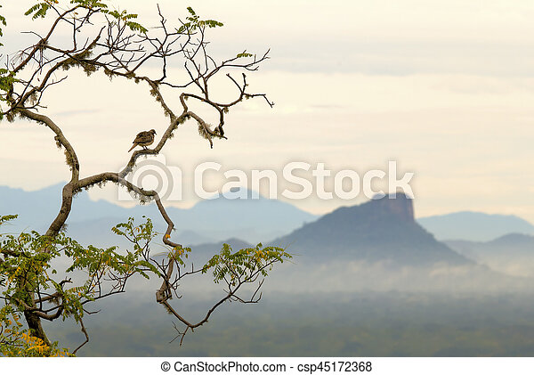 Asian Dove sitting on a tree on the background of the valley and mountains - csp45172368