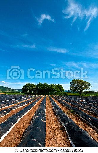 Asparagus field - csp9579526